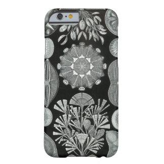 Caso del iPhone 6 de Haeckel - Diatomea Funda De iPhone 6 Barely There