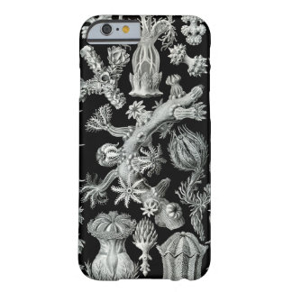 Caso del iPhone 6 de Haeckel - Gorgonida Funda De iPhone 6 Barely There