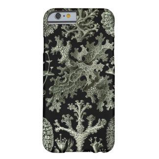 Caso del iPhone 6 de Haeckel - Lichenes Funda Para iPhone 6 Barely There