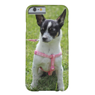 caso del iPhone 6 de la chihuahua