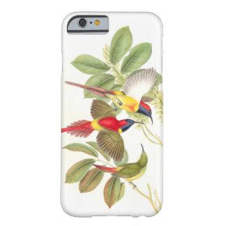 Caso del iPhone 6 de los pájaros de Goulds Sunbird Funda De iPhone 6 Barely There