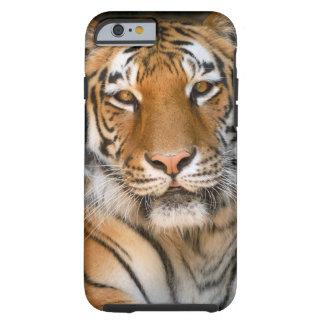 Caso del iPhone 6 del tigre de Bengala Funda De iPhone 6 Tough