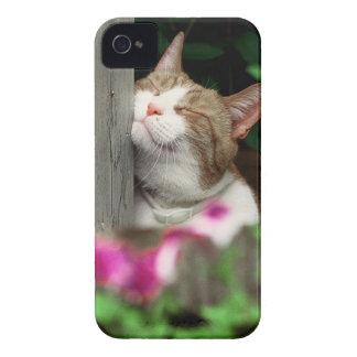 caso del iPhone con la cara feliz del gato iPhone 4 Protector