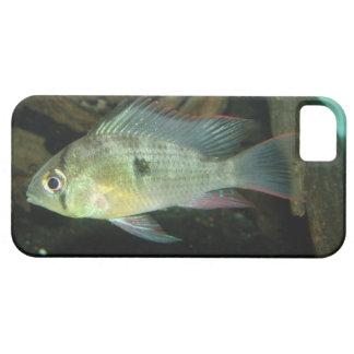 caso del iPhone con la tetra imagen de los pescado iPhone 5 Case-Mate Carcasa