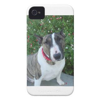Caso del iPhone de bull terrier del inglés Case-Mate iPhone 4 Carcasas