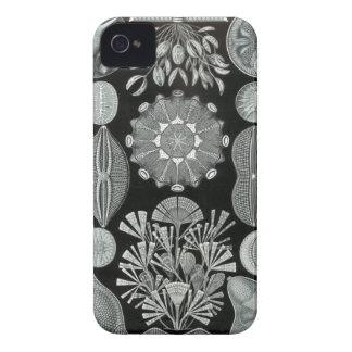 Caso del iPhone de Haeckel - Diatomea iPhone 4 Carcasas