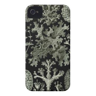Caso del iPhone de Haeckel - Lichenes iPhone 4 Case-Mate Cárcasas