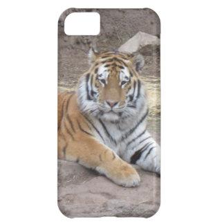 Caso del iPhone de la cara del tigre