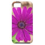 Caso del iphone de la impresión floral iPhone 5 carcasas
