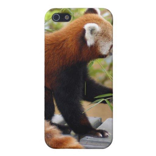 Caso del iPhone de la panda roja iPhone 5 Cobertura