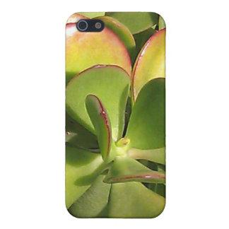 Caso del iPhone de la planta del jade iPhone 5 Fundas