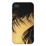 Caso del iphone de la puesta del sol de la palmera iPhone 4 carcasa