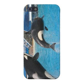 Caso del iPhone de las ballenas de la orca iPhone 5 Protector