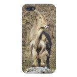 Caso del iPhone de las ovejas de montaña iPhone 5 Fundas