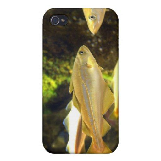 Caso del iPhone de los pescados de la brema de mar iPhone 4 Fundas