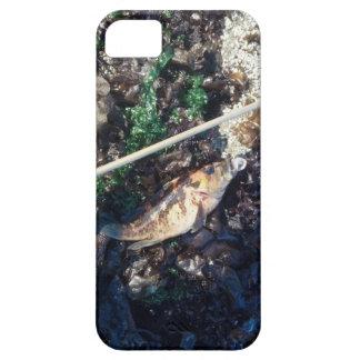 Caso del iPhone de los pescados y del quelpo iPhone 5 Case-Mate Cárcasa
