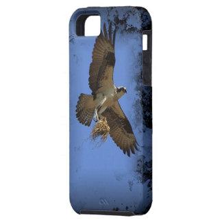 Caso del iPhone de Osprey del vuelo (halcón de pes iPhone 5 Case-Mate Coberturas