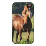 Caso del iPhone del caballo de la castaña iPhone 4 Cárcasas