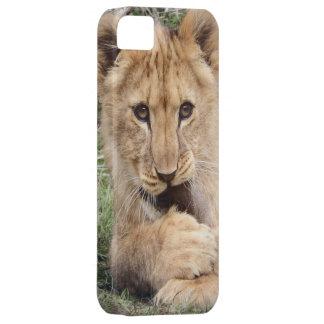Caso del iPhone del cachorro de león Funda Para iPhone SE/5/5s