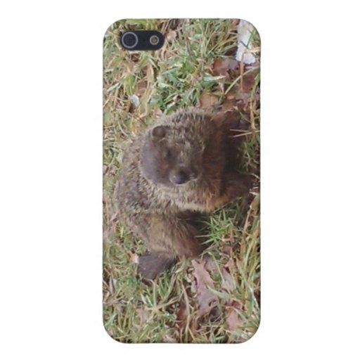 Caso del iphone del cerdo de tierra iPhone 5 protectores