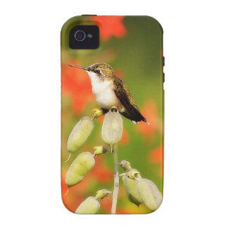 Caso del iPhone del colibrí Case-Mate iPhone 4 Fundas