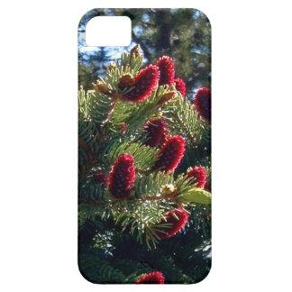 Caso del iPhone del cono del pino rojo iPhone 5 Funda