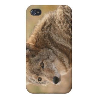 Caso del iPhone del coyote del bebé iPhone 4 Fundas