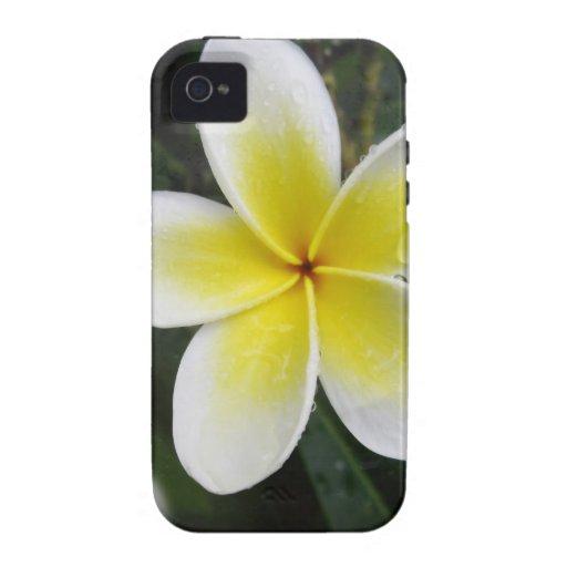 Caso del iPhone del Frangipani y de las gotas de a Case-Mate iPhone 4 Carcasas