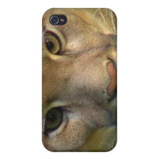 Caso del iPhone del gato de la montaña del puma iPhone 4 Cárcasas