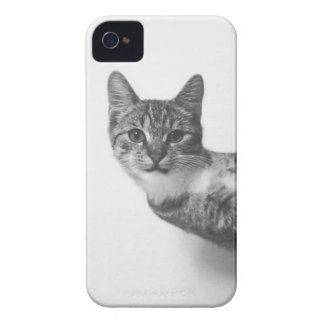 Caso del iPhone del gato Funda Para iPhone 4 De Case-Mate