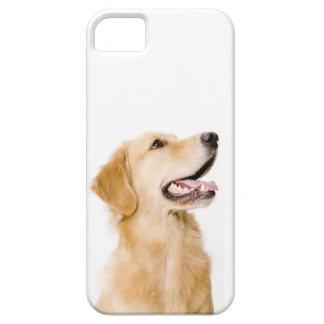 Caso del iPhone del golden retriever Funda Para iPhone 5 Barely There