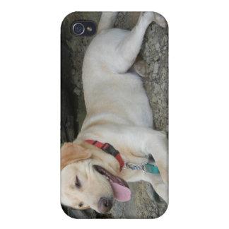 Caso del iPhone del labrador retriever iPhone 4/4S Carcasas