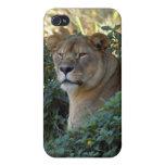 Caso del iPhone del león de Barbary iPhone 4 Cobertura