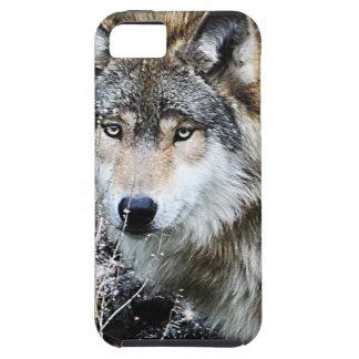 Caso del iPhone del lobo gris iPhone 5 Carcasa