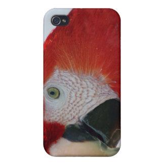 Caso del iPhone del Macaw del escarlata iPhone 4 Carcasas