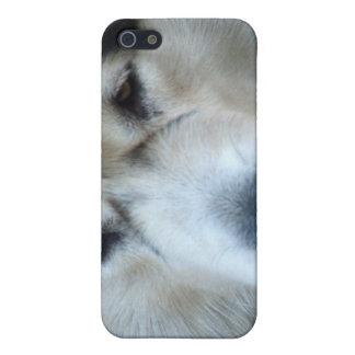 Caso del iPhone del Malamute del lobo iPhone 5 Carcasas