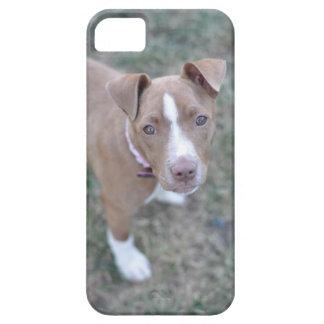 Caso del iPhone del perrito del pitbull iPhone 5 Fundas