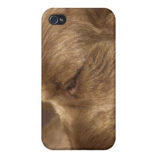 Caso del iPhone del perro de afgano iPhone 4 Carcasa