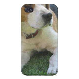 Caso del iPhone del perro de caza del beagle iPhone 4/4S Carcasas
