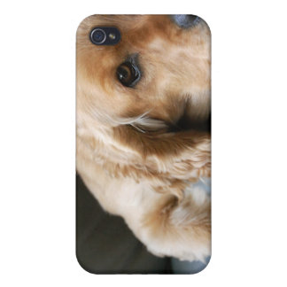 Caso del iPhone del perro de cocker spaniel iPhone 4/4S Carcasas