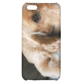 Caso del iPhone del perro de cocker spaniel