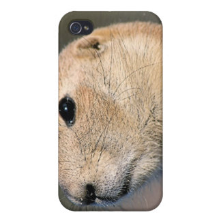 Caso del iPhone del perro de las praderas iPhone 4 Cárcasas