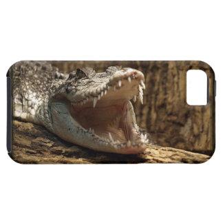 Caso del iPhone del reptil del cocodrilo del iPhone 5 Fundas