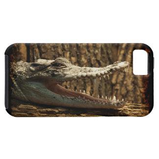 Caso del iPhone del reptil del cocodrilo del iPhone 5 Carcasa