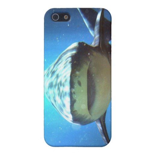 Caso del iPhone del tiburón iPhone 5 Carcasas