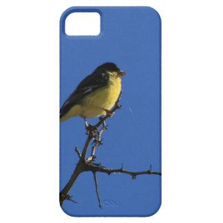 Caso del pájaro cantante iPhone 5 fundas