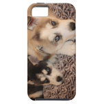 Caso del perrito de Huskey para Ipone 5 iPhone 5 Case-Mate Protector