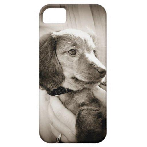 Caso del perrito del Dachshund iPhone 5 Carcasa