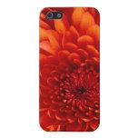 caso del tacto de iPod del crisantemo iPhone 5 Carcasa
