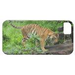 Caso del tigre de Bengala para IPhone 5 iPhone 5 Cobertura